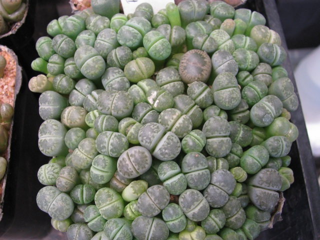 some of my seedlings Seedli16