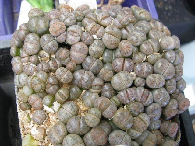 some of my seedlings Seedli17