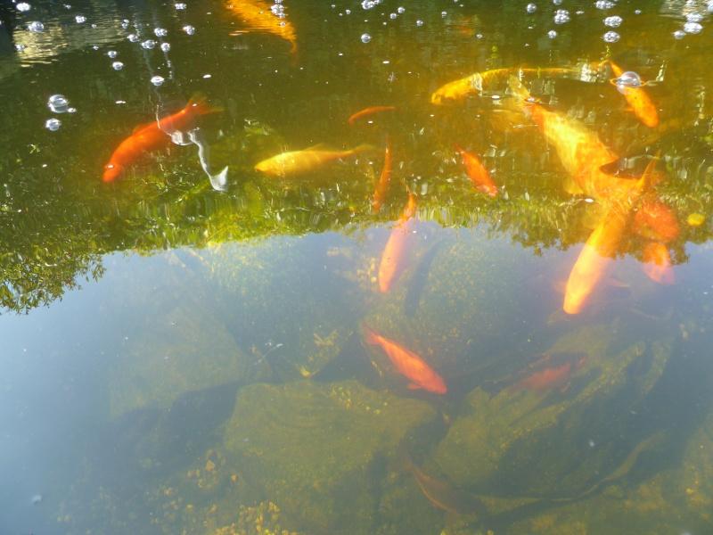photos des bassins prises ce matin très ensoleillé ... P1010215