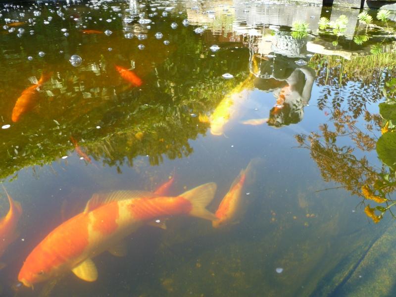 photos des bassins prises ce matin très ensoleillé ... P1010216