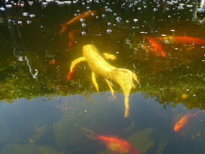 photos des bassins prises ce matin très ensoleillé ... P1010217