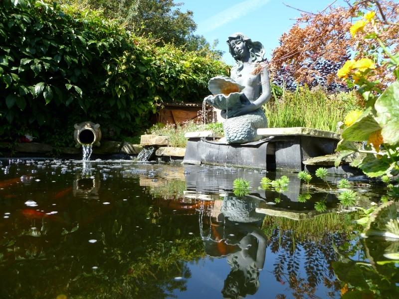 photos des bassins prises ce matin très ensoleillé ... P1010218
