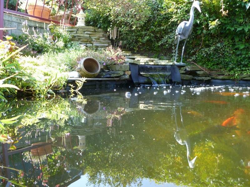 photos des bassins prises ce matin très ensoleillé ... P1010219