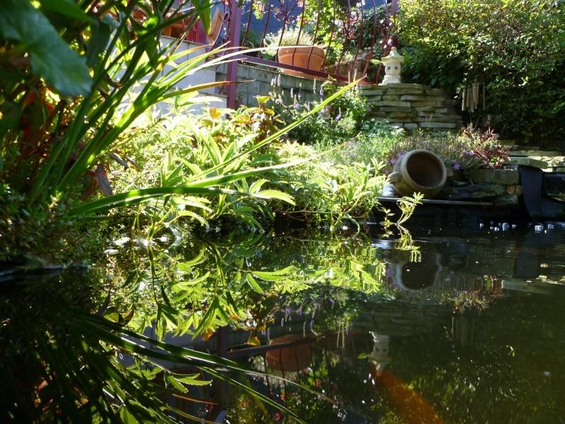 photos des bassins prises ce matin très ensoleillé ... P1010221