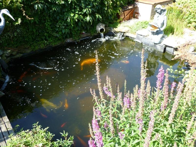 photos des bassins prises ce matin très ensoleillé ... P1010223