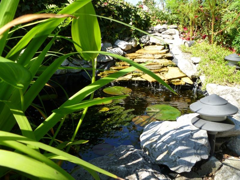 photos des bassins prises ce matin très ensoleillé ... P1010224