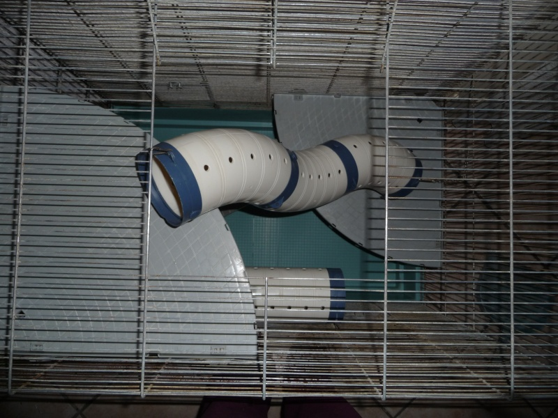 Vends cage jenny complete dans le 13 P1020817