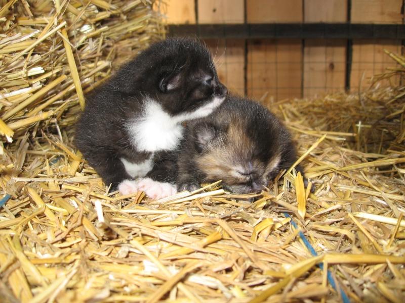 Urgent 2 chatons à réserver Img_7126