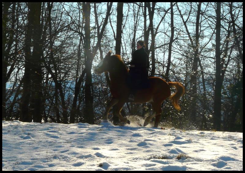 Nouveau concours photos ! La neige, vous, vos chevaux ! P1030210