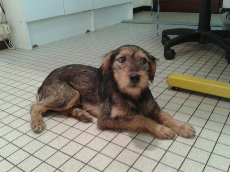 Appel aux dons pour les opérations de Fortunate ( la petite chienne trouvée accidentée a Guichen)[somme réunie merci a tous] 2011-118