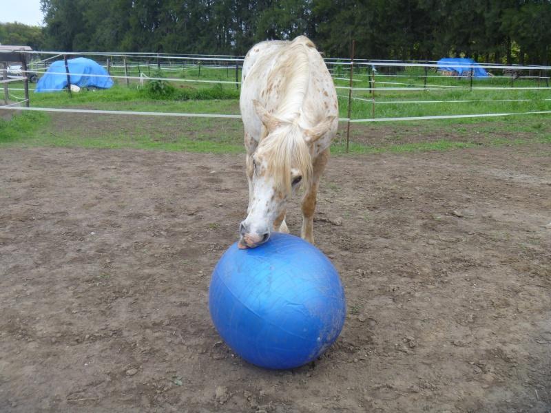les ballons pour chevaux, enfin il s'y ait intéressé !!!! ;) P1010514