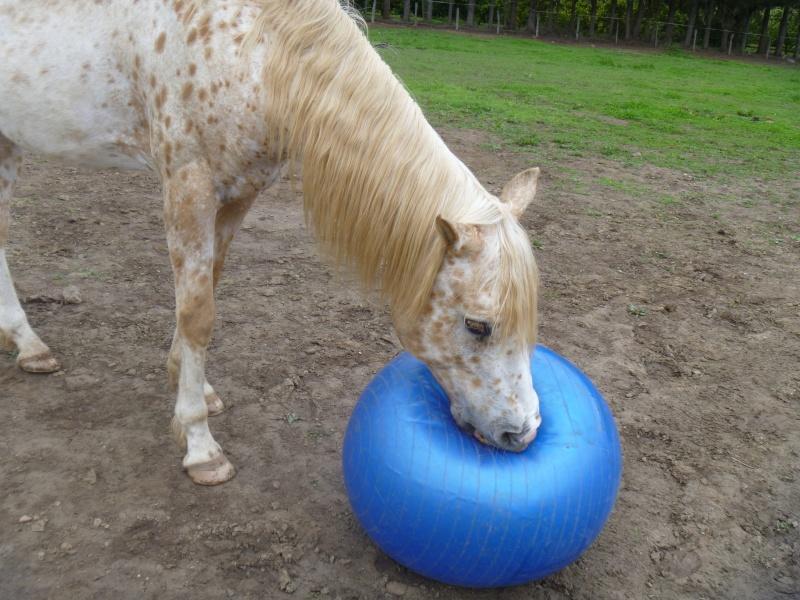 les ballons pour chevaux, enfin il s'y ait intéressé !!!! ;) P1010515
