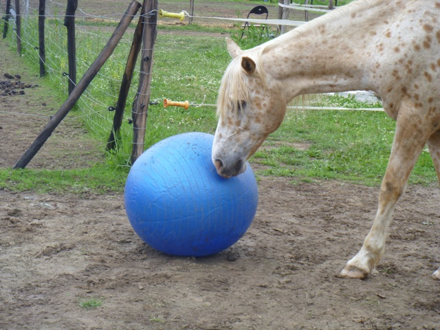 les ballons pour chevaux, enfin il s'y ait intéressé !!!! ;) P1010516