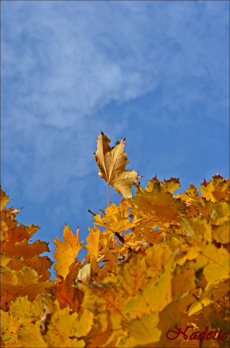 Alsacian Autumn Dsc_0011