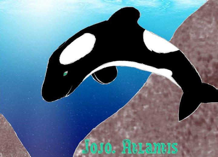 (dessin) dessin d'orque - Page 4 Orque11