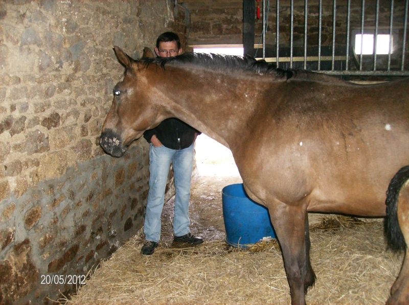 Visite à l'American Horse breeding 00414