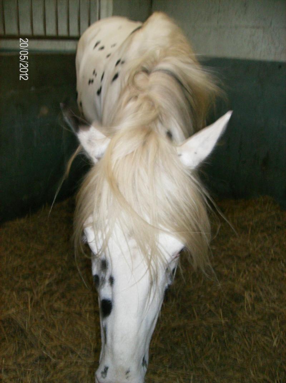 Visite à l'American Horse breeding 00513
