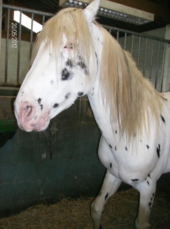 Visite à l'American Horse breeding 00711