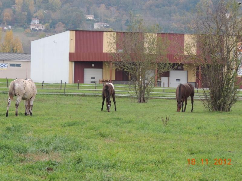 Mes chevaux, un mélange d'un peu tout le monde! - Page 2 00915