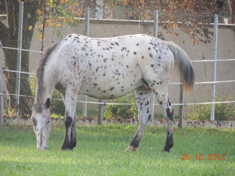 Ecrire des textes qui fon parler mes chevaux! 01613