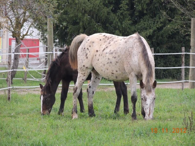 Mes chevaux, un mélange d'un peu tout le monde! - Page 2 01815