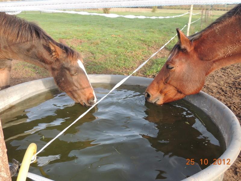 Mes chevaux, un mélange d'un peu tout le monde! - Page 2 03010
