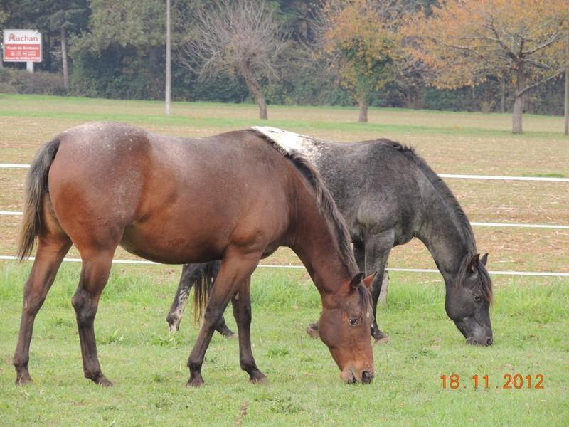 Mes chevaux, un mélange d'un peu tout le monde! - Page 2 07010