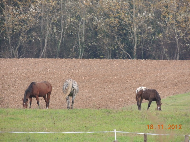 Mes chevaux, un mélange d'un peu tout le monde! - Page 2 07211