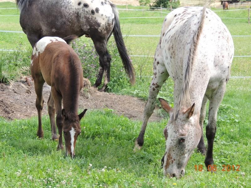 Mes chevaux, un mélange d'un peu tout le monde! 08111