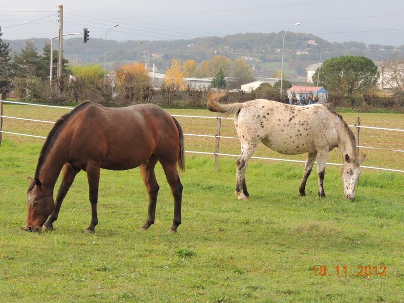 Mes chevaux, un mélange d'un peu tout le monde! - Page 2 08411