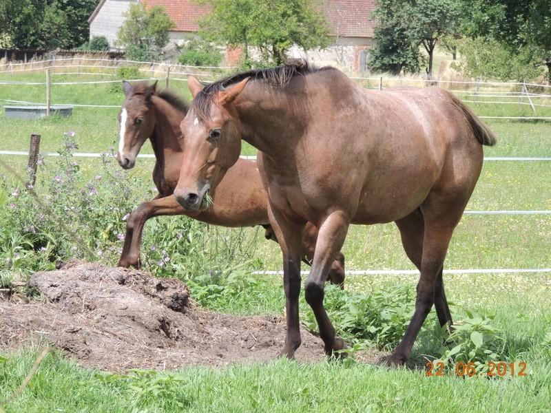 Mes chevaux, un mélange d'un peu tout le monde! 08712