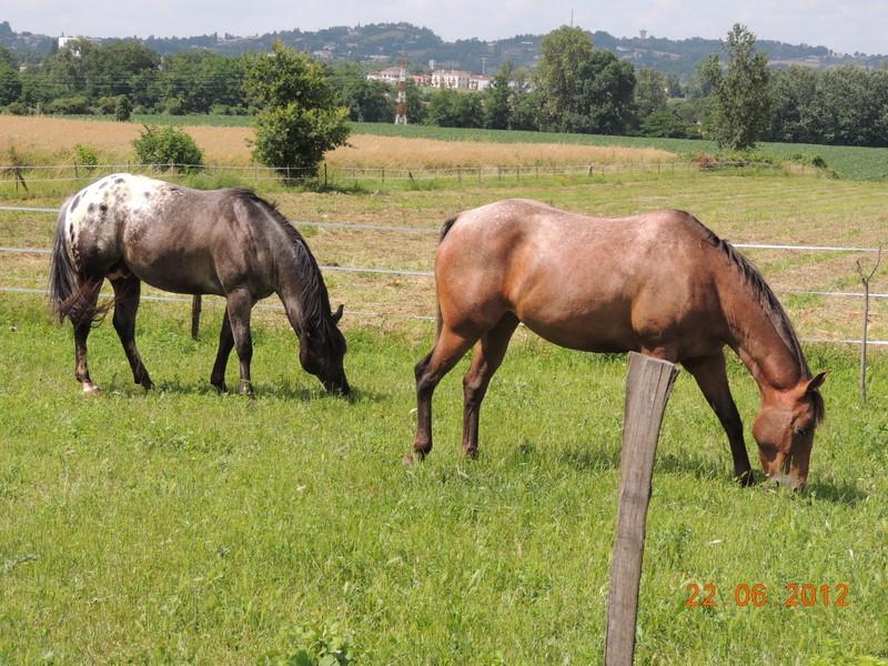Mes chevaux, un mélange d'un peu tout le monde! 10410