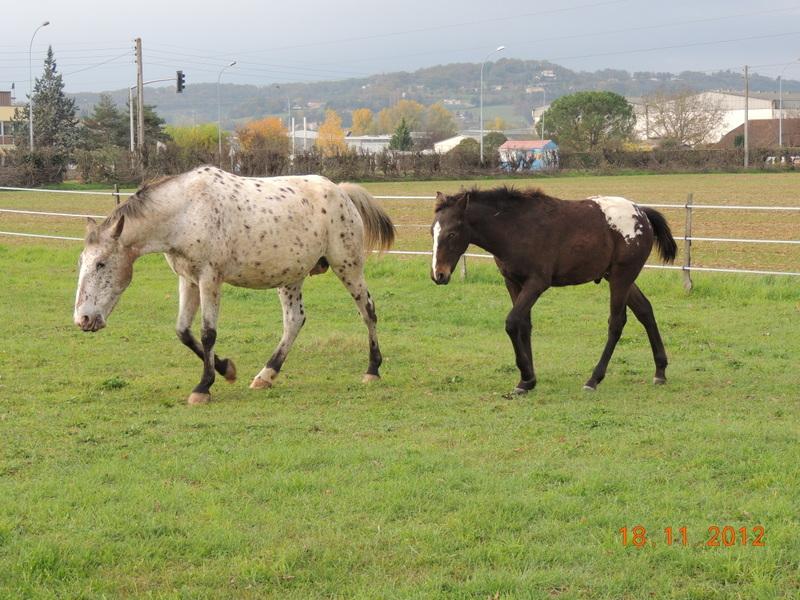 Mes chevaux, un mélange d'un peu tout le monde! - Page 2 10411
