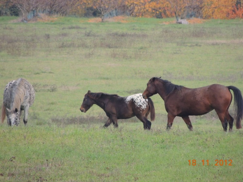 Mes chevaux, un mélange d'un peu tout le monde! - Page 2 10511