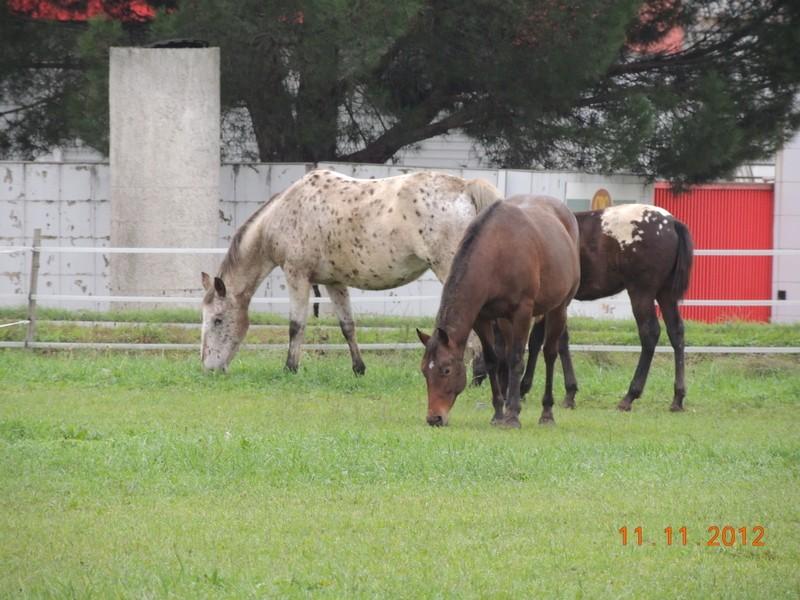 Mes chevaux, un mélange d'un peu tout le monde! - Page 2 11011