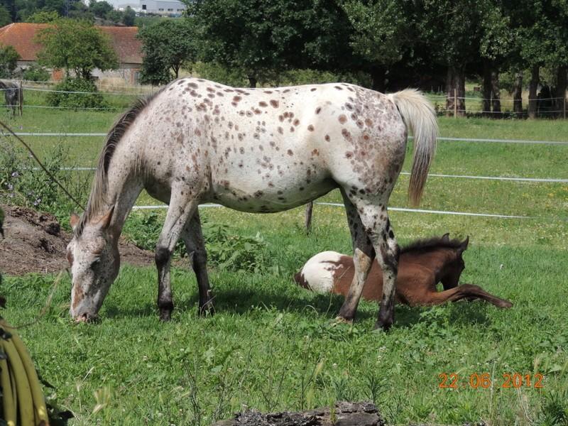 Mes chevaux, un mélange d'un peu tout le monde! 11210