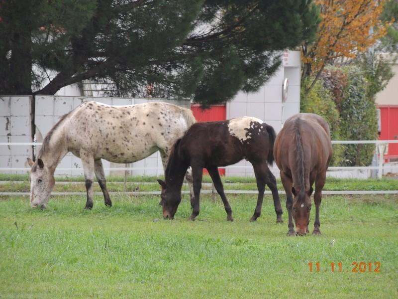 Mes chevaux, un mélange d'un peu tout le monde! - Page 2 11211
