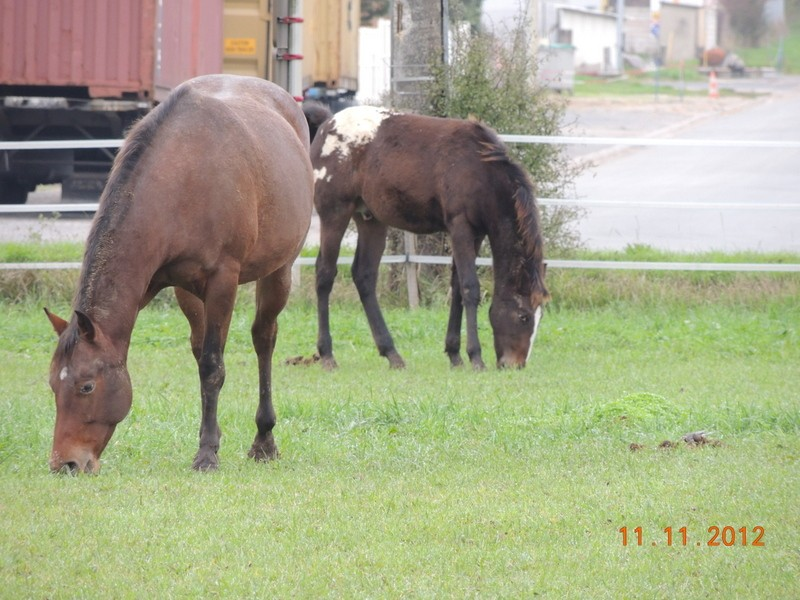 Mes chevaux, un mélange d'un peu tout le monde! - Page 2 12410