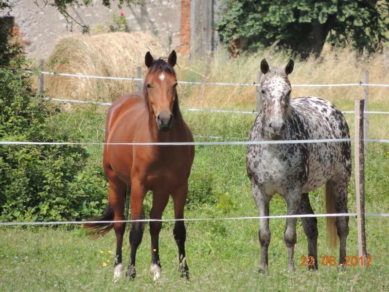 Mes chevaux, un mélange d'un peu tout le monde! 12510
