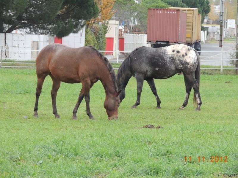 Mes chevaux, un mélange d'un peu tout le monde! - Page 2 14510