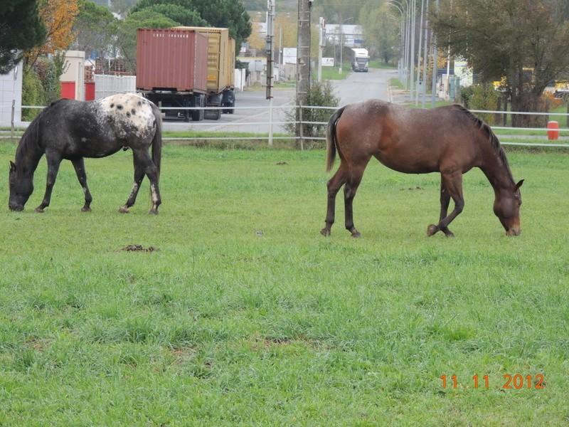 Mes chevaux, un mélange d'un peu tout le monde! - Page 2 14610