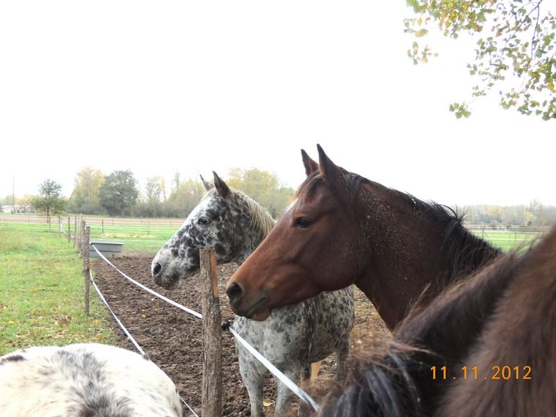 Mes chevaux, un mélange d'un peu tout le monde! - Page 2 20411