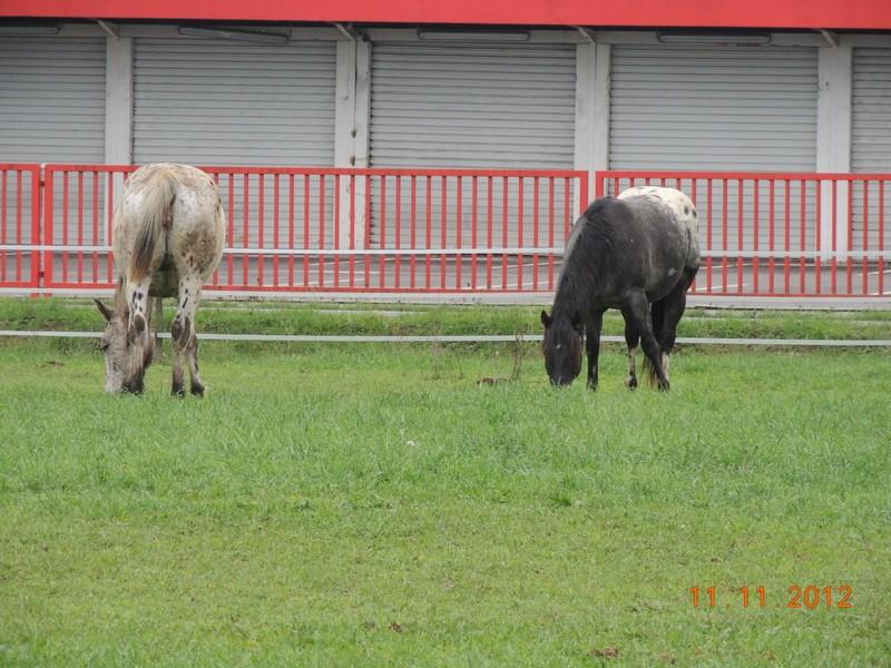 Mes chevaux, un mélange d'un peu tout le monde! - Page 2 24510