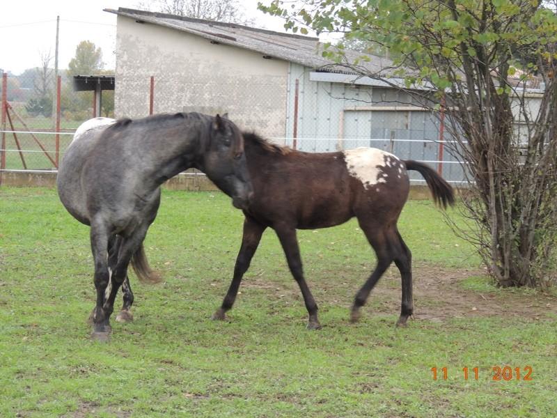 Mes chevaux, un mélange d'un peu tout le monde! - Page 2 25910