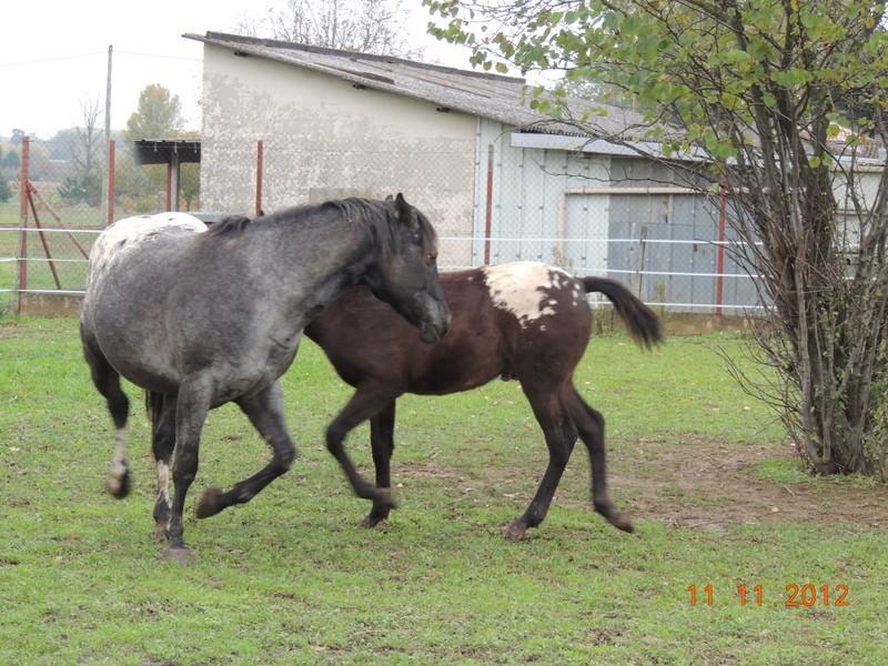 Mes chevaux, un mélange d'un peu tout le monde! - Page 2 26010