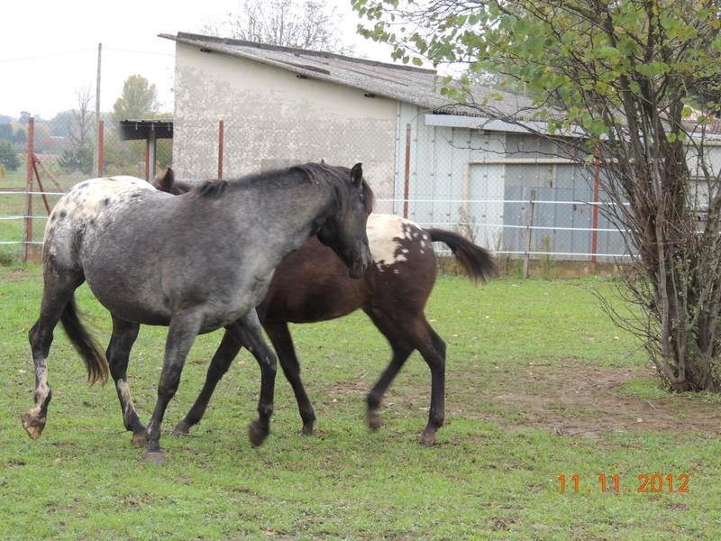 Mes chevaux, un mélange d'un peu tout le monde! - Page 2 26110