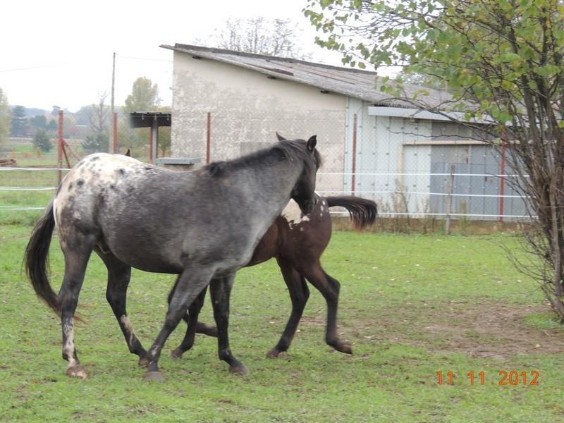 Mes chevaux, un mélange d'un peu tout le monde! - Page 2 26210