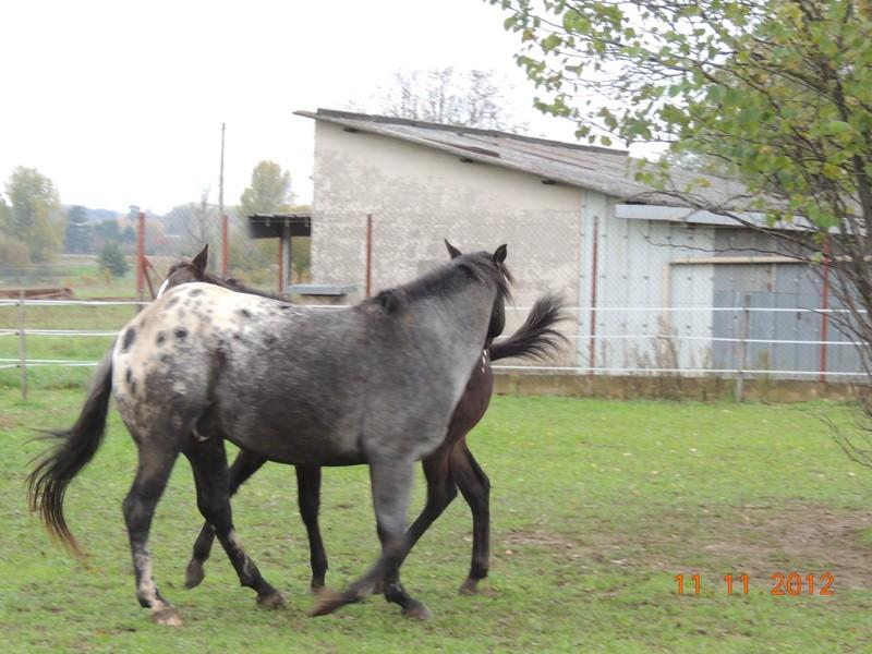 Mes chevaux, un mélange d'un peu tout le monde! - Page 2 26311