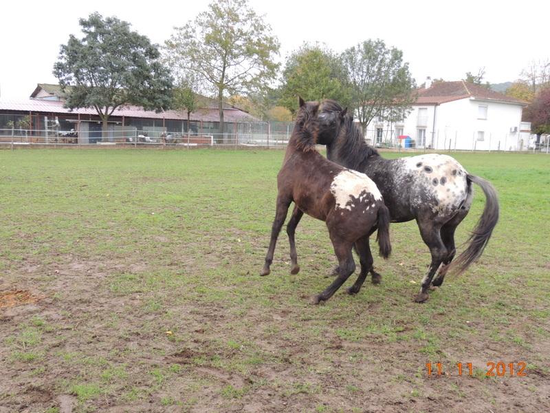 Mes chevaux, un mélange d'un peu tout le monde! - Page 2 26410