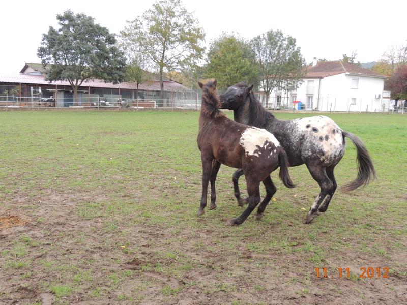 Mes chevaux, un mélange d'un peu tout le monde! - Page 2 26510